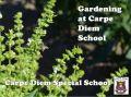 Carpe Diem School Garden Project